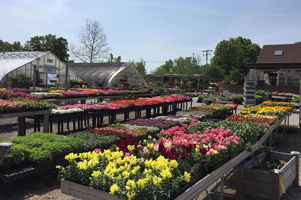 Scott S Landscaping Nursery Danbury Garden Design Expert